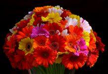 Blumen zum Muttertag verschicken oder nicht?