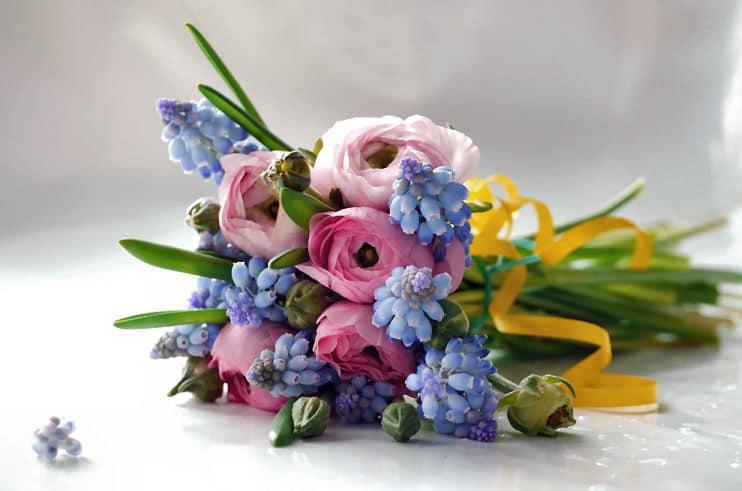 Schöne Blumenarten - Rosen und Traubenhyazinthen