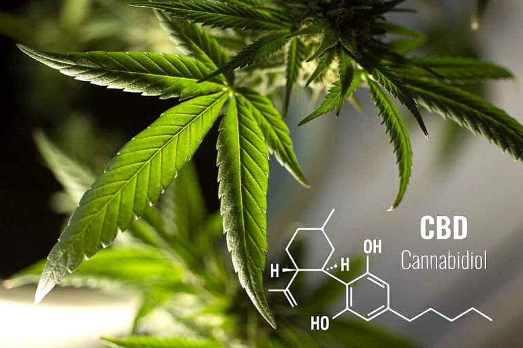 Das CBD Zauberkraut ist dank das Wirkstoffs Cannabiol so heilsam.