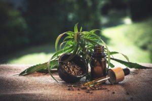 CBD Blätter, Samen und Öl