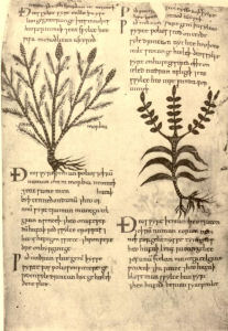 Kräuter im Mittelalter
