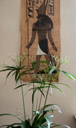 Papyrus und Horus