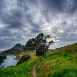 Landschaft in Neuseeland - da wo der Manuka Strauch wächst