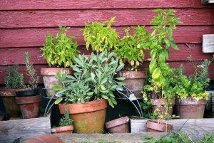 ein klitzekleiner Kräutergarten