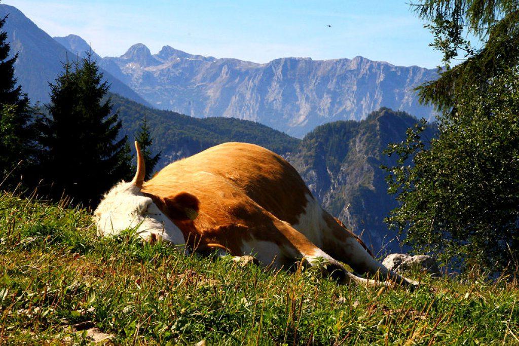 Seelenruhig schlafen - kein Wunder in solch schöner Landschaft.