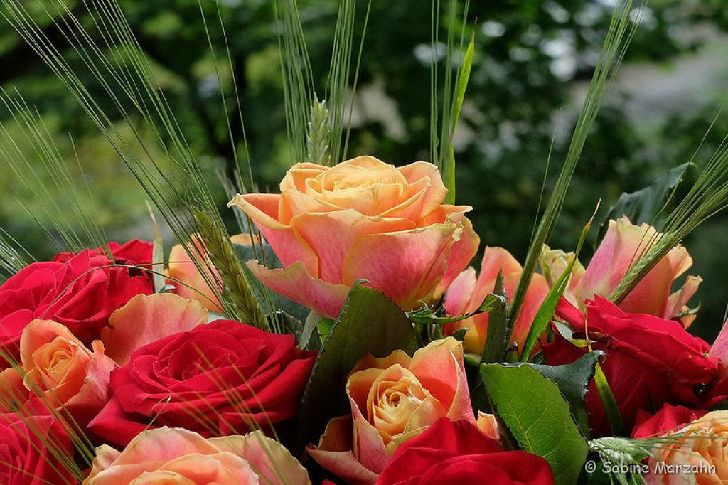 Rosen im Hochzeitsstrauß