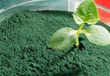 Die Wirkung von Spirulina ist noch nicht ausreichend erforscht. Auf jeden Fall wirkt Spirulina entgiftend und nährend.